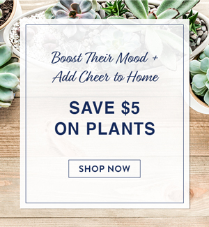 Boost Their Mood + Add Cheer To Home. Save $5 On Plants