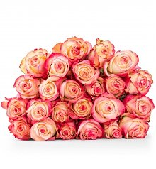 Specialty Gifts: Paloma Roses